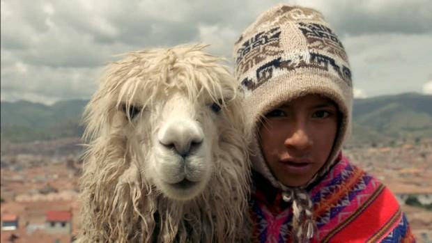 peruvien-alpaga-cuzco-ville-culture-indigene